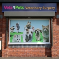 vets 4 pets window graphics